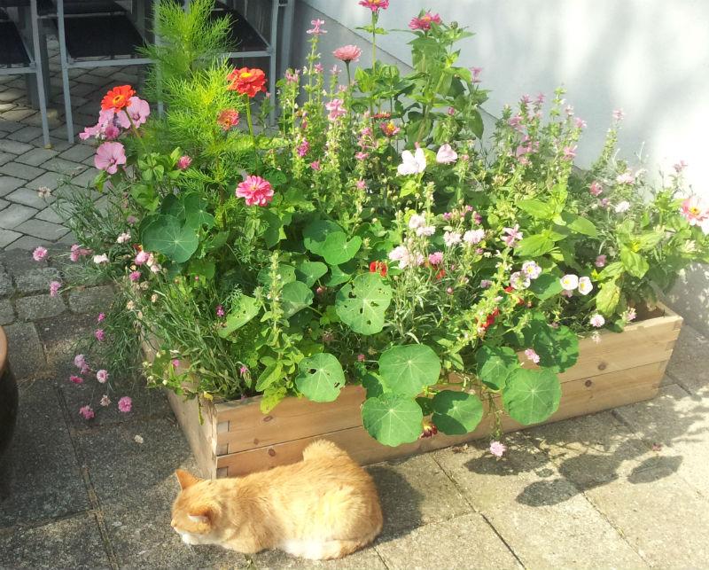 blomster i plantekasser