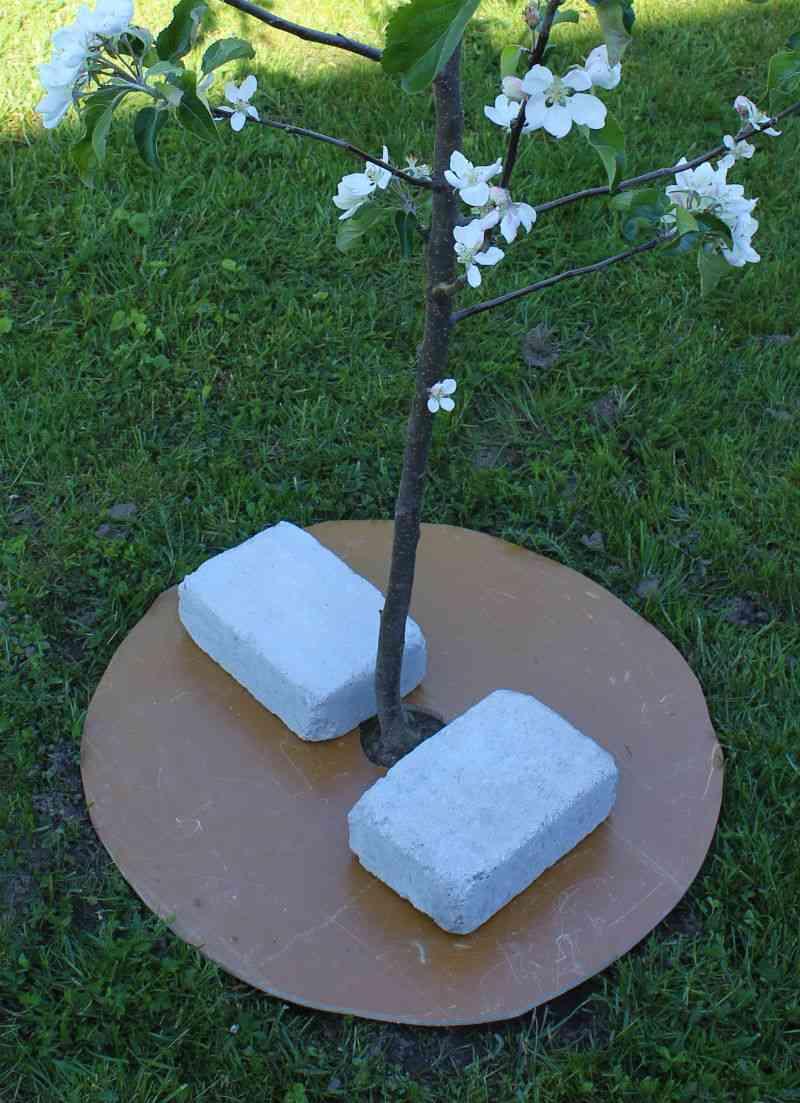 Træ med 'shadowmaker' ukrudtsfjerner
