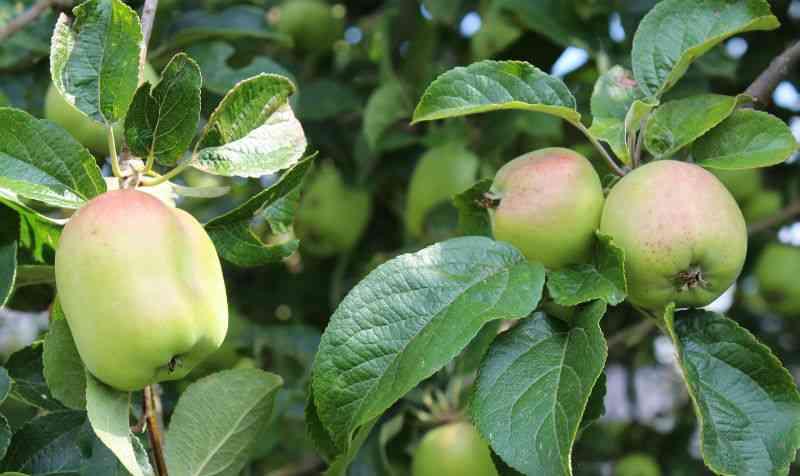 Filippa æbler 26/7 2014