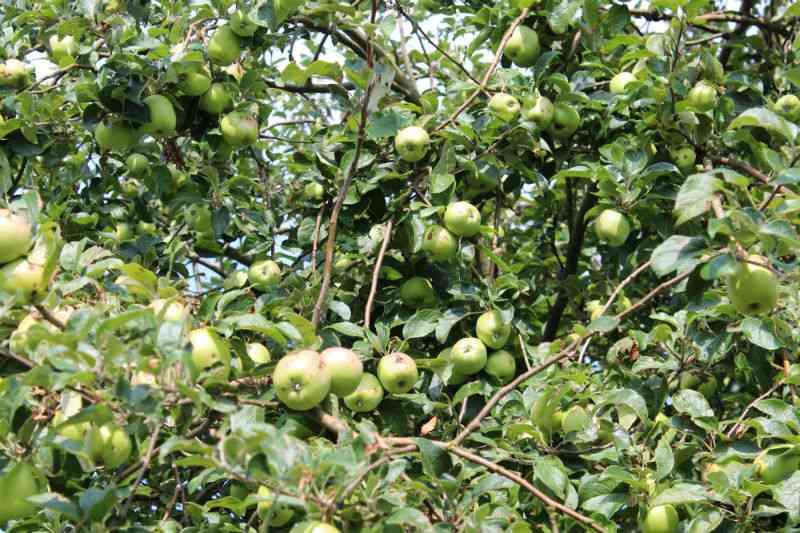 Filippa æbler - 2014 bliver vist rigt på udbytte