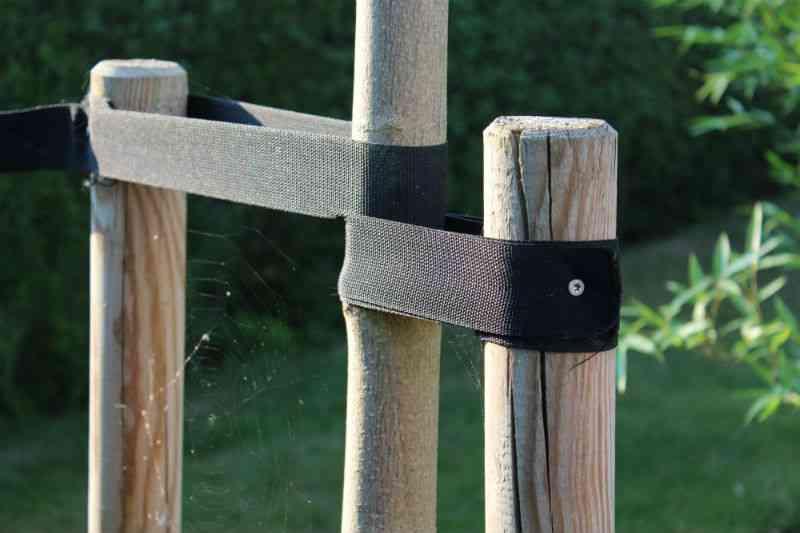 Kugleahorn støttet af pæle og stropper