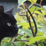 Katte spiser Kiwi