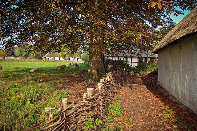 hegn af træ og pile på frilandsmuseet