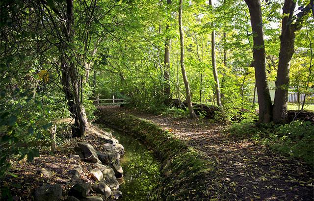 frilandsmuseet skov