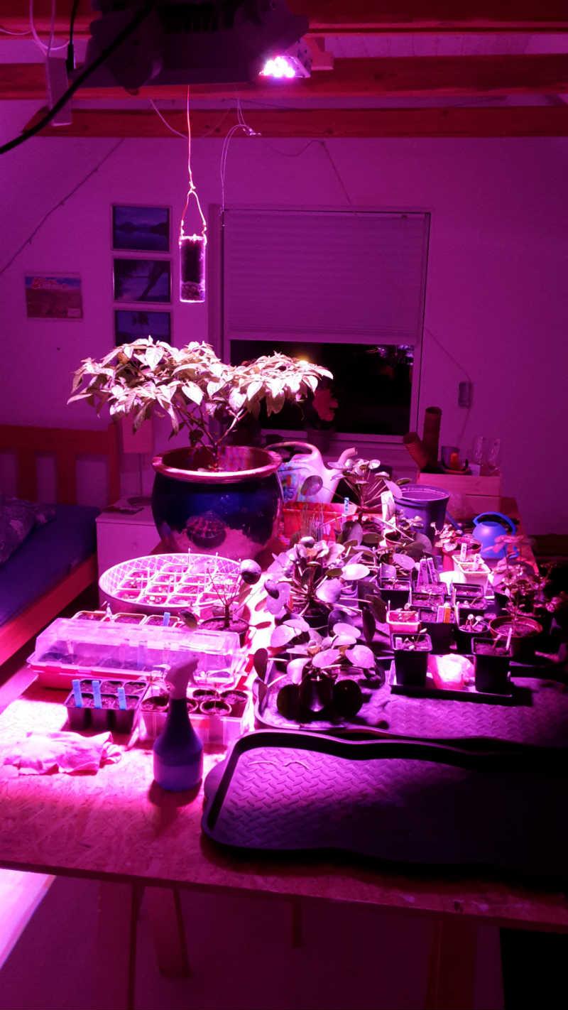 LED vækstlys på arbejde