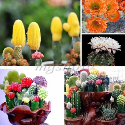 blandet kaktus frø i pose