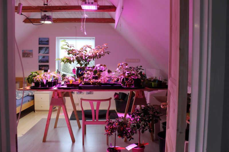 LED Vækstlampe på arbejde - der er brug for 1 mere !