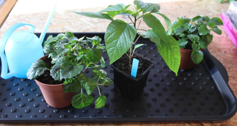 Billig plantebakke