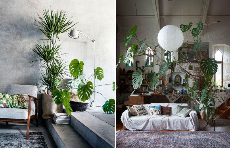 indendørs planter salg