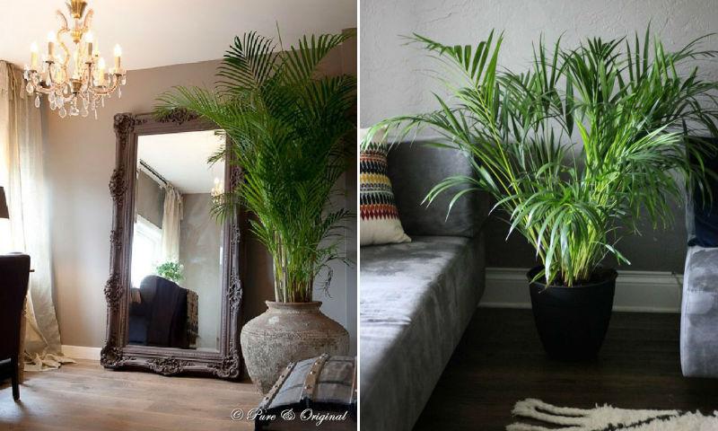 store grønne indendørs planter
