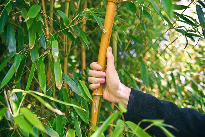 bambus-peter-hansens-have