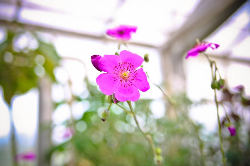 grennessminde-blomster