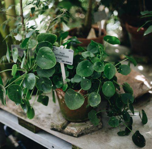 Trendy stueplanter til boligen - Find inspiration her!