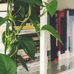 25 stueplanter der ikke kræver meget lys