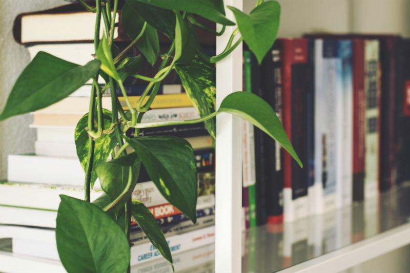 planter der elsker skygge