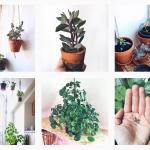 Tips til at vanding af stueplanter