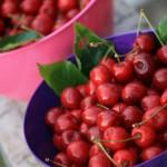 Søde kirsebær / moreller