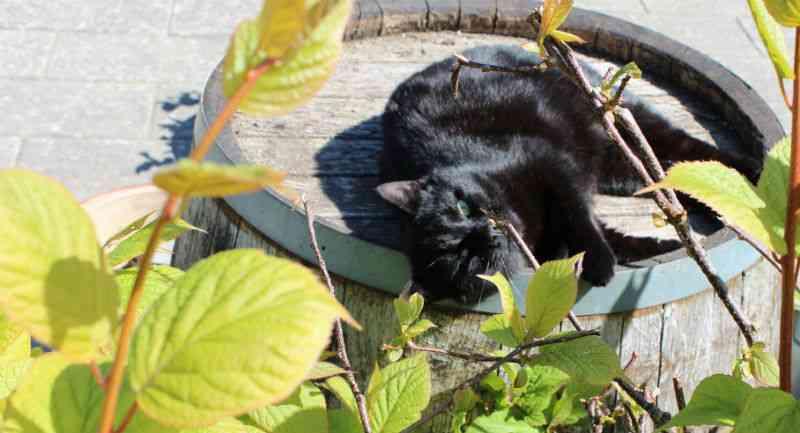 Katte og kiwibuske