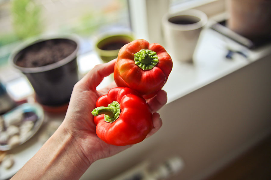 Dyrk peberfrugt indenfor