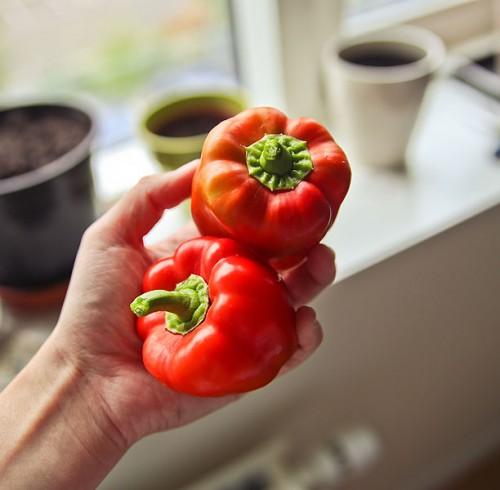 peberfrugt i vindueskarmen