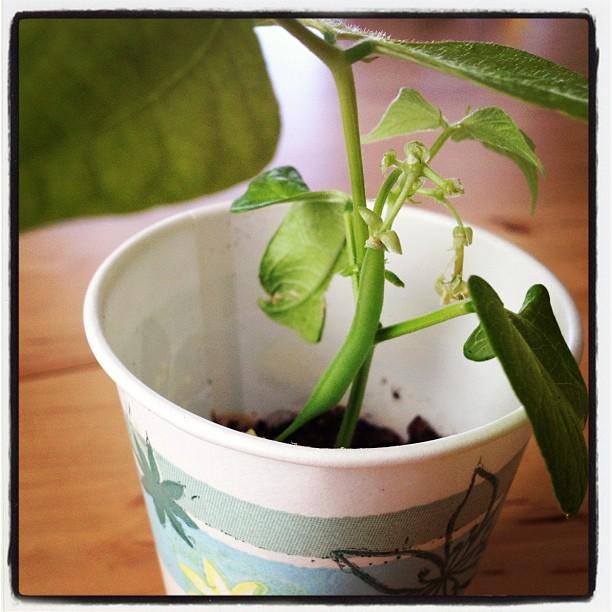 dyrk planter i papirskrus