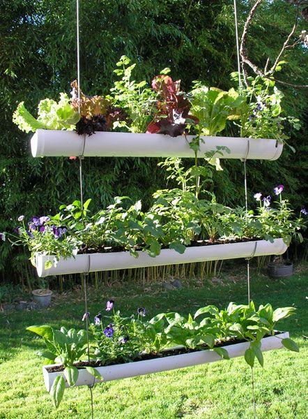 tagrenderoer til planter