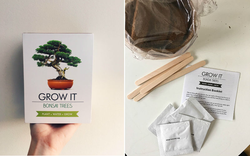 grow it bonsai trees