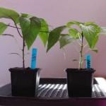 Billig plantebakke til opbevaring & vanding