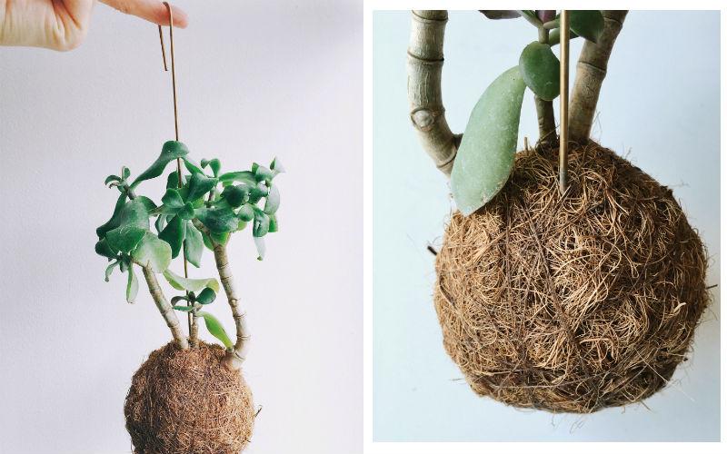 planteplaneter, en hængeplante