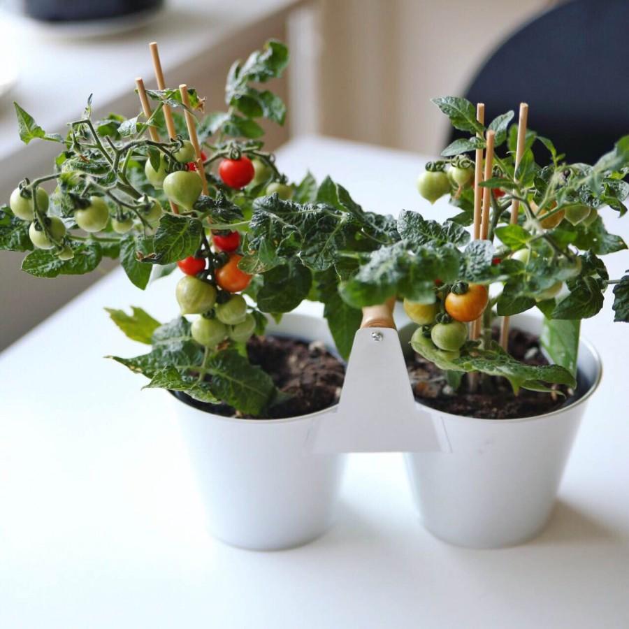 Kitchen Minis