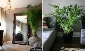 sommerfuglepalme store stueplanter