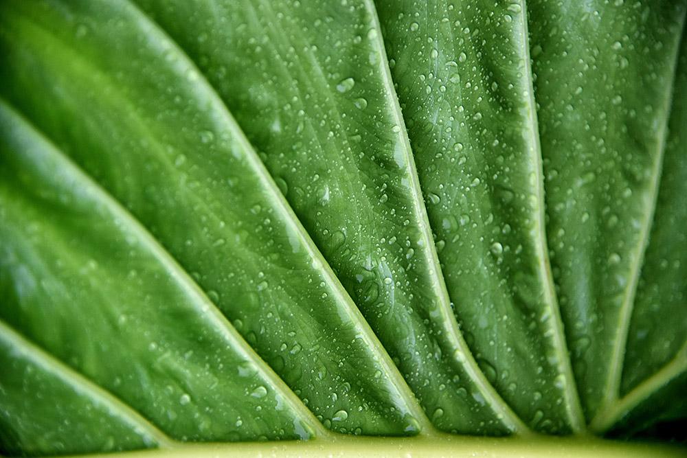 Grønt blad med vand på
