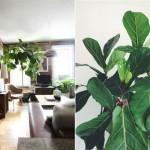 Store stueplanter der pynter