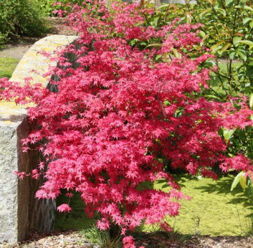 Buske i haven: Inspiration & tips til pasning