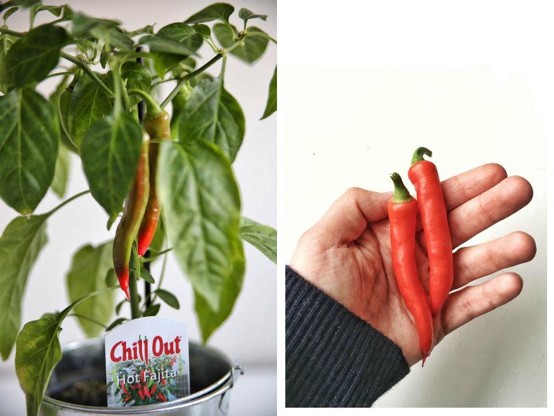 Hot Fajita chili