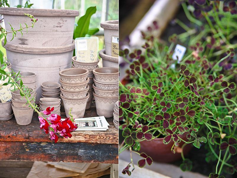 flotte-planter-fra-grennessminde