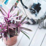 Flotte urtepotteskjulere & tips til at vælge de rette