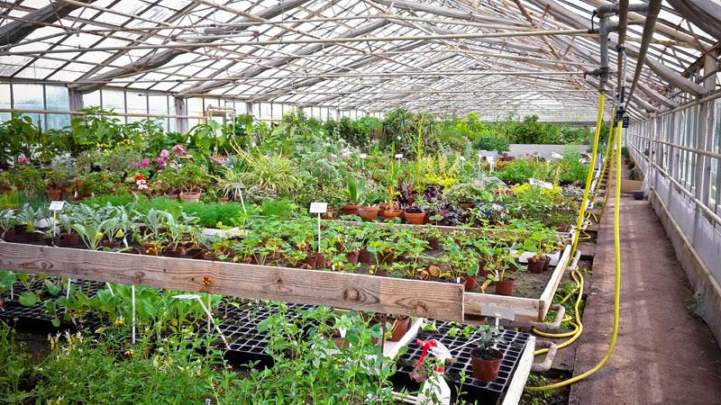 øko planter hos grennessminde