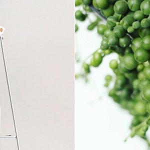 Stueplanten perler på snor