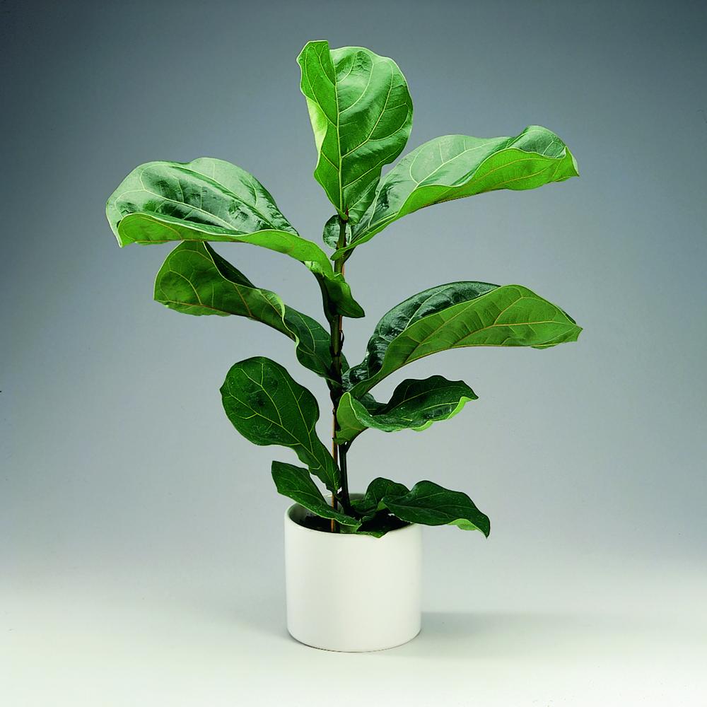 25 flotte stueplanter der ikke kræver meget lys