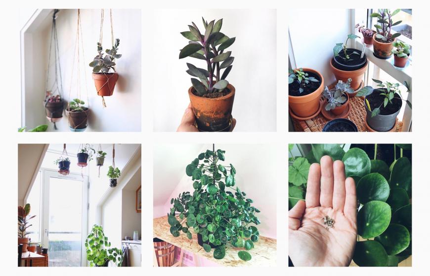 vanding af potteplanter